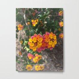Arizona Flowers Metal Print