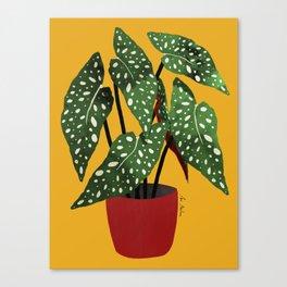 Begonia maculata pot watercolor Canvas Print