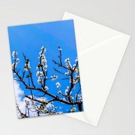 Plum flower, Photo Plum flower, Plum flower hill Stationery Cards