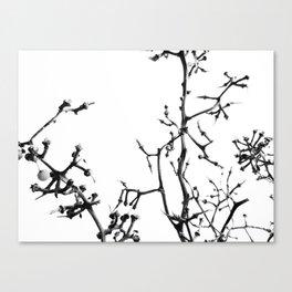Strange Trees 5 Canvas Print