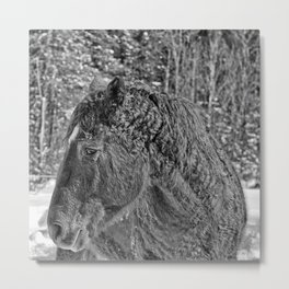 Curly Metal Print