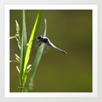 dragonfly Art Prints featuring Dragonfly by Christina Rollo