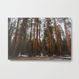 Giants of Sequoia Metal Print