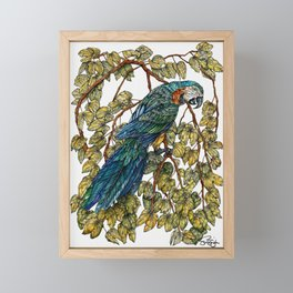 Macaw Framed Mini Art Print