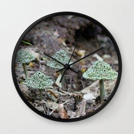 Pinus Taeda - Loblolly Pine Wall Clock