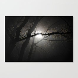 Tree in the fog at night Canvas Print