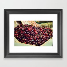 Summer Cherries Framed Art Print