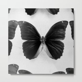 Dramatic Butterfly Metal Print