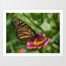 monarch butterfly 2011 Art Print