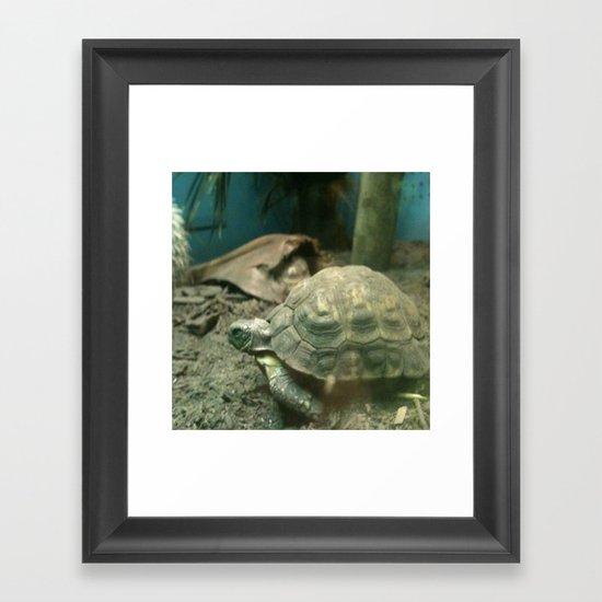 Giant Turtle Framed Art Print