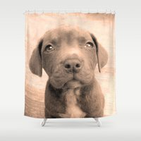 pitbull Shower Curtains featuring Pitbull puppy by ritmo boxer designs