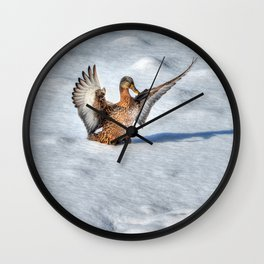 Happy Landing - Mallard Duck in Snow Wall Clock
