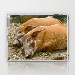 Red River Hogs taking a nap Laptop & iPad Skin