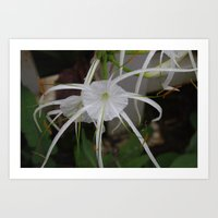 Spider Lily Art Print