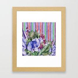 Lathyrus 2 Framed Art Print