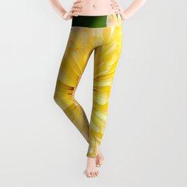 Beautiful Yellow Marigold Goldbloom Close Up  Leggings
