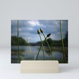 Reeds at the Lake Mini Art Print