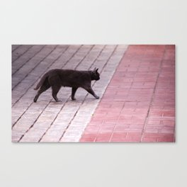 Cat Walking  6589 Canvas Print