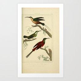 082-Brin, Hummingbirds2 Art Print