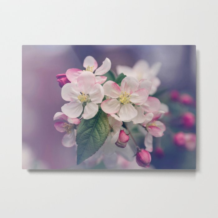 Young Cherry Blossom Flowers Metal Print