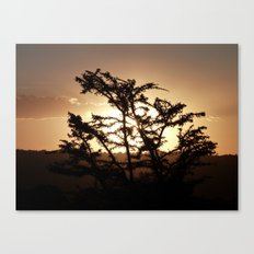 Sunset through acacia tree Canvas Print