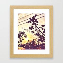 December Sunrise Framed Art Print