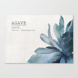 Agave, botanic print - grey Canvas Print
