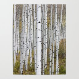 Colorado Forest Poster