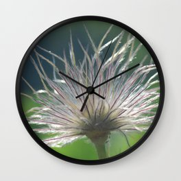 Pasque Flower Wall Clock