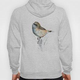 Mr Riroriro, the New Zealand Grey Warbler Hoody