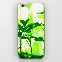 clover iPhone & iPod Skins featuring Clover by Bella Mahri-PhotoArt By Tina