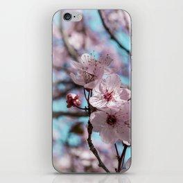 Sakura.Cherry Blossom iPhone Skin