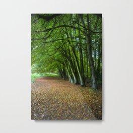Autumnal Glade Metal Print