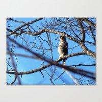 hawk Canvas Prints featuring Hawk by ACamp