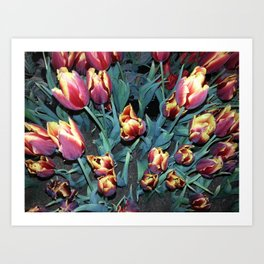 Red and Yellow Tulip Field Art Print
