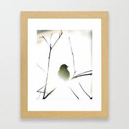 The golden sparrow Framed Art Print