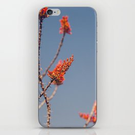 Ocotillo in Bloom iPhone Skin