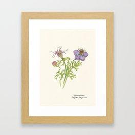 Nigella Hispanica Framed Art Print