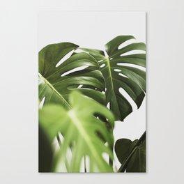 Verdure #10 Canvas Print