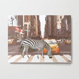 Zebra in New York City Metal Print