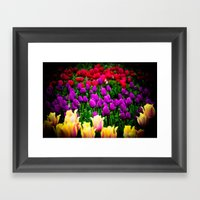 Tulip Festival in Woodburn, Oregon, 6 Framed Art Print