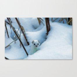 Winter weasel Canvas Print