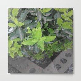 Pretty green. Metal Print