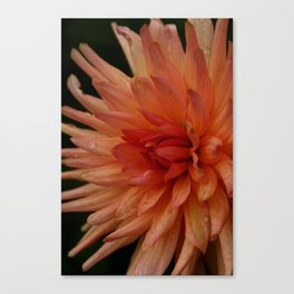 Grown With Love Canvas Print