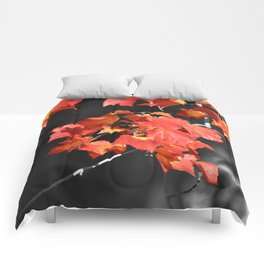 Cold Fall Comforters