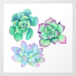 Bright Floral Succulents Art Print