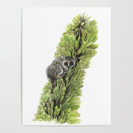 Mouse Lemur in the Spiny Forest Poster