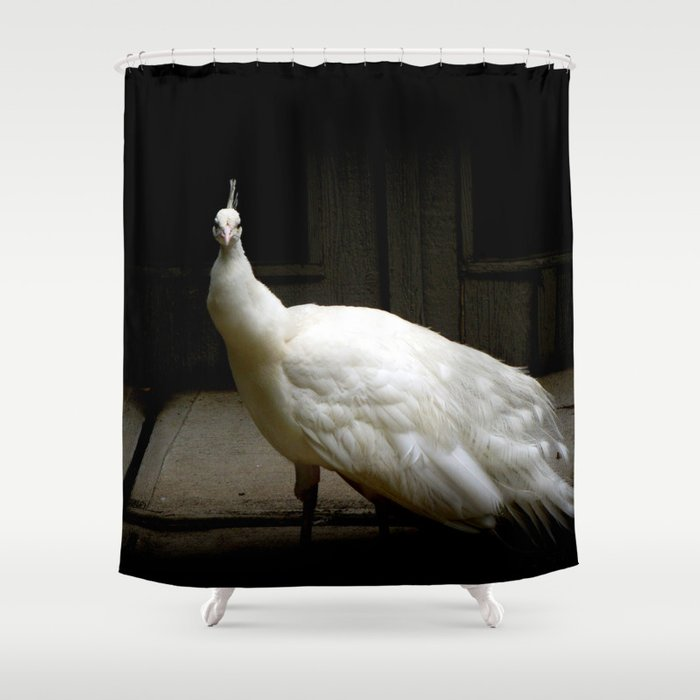 Elegant White Peacock Vintage Shabby Rustic Chic French Decor Style Woodland Bird Nature Photograph Shower Curtain
