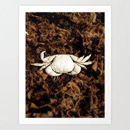 Bleach by Jessi Fikan Art Print