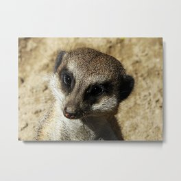 MM - Meerkat portrait Metal Print